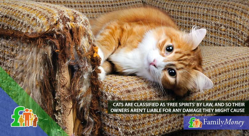 A cat lying on a sofa it damages, for which its owner is not liable as cats are classified as 'free spirits' by law