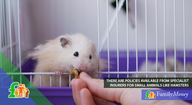 A picture of a hamster eating in its cage. A hamster can be insured by a specialist insurer