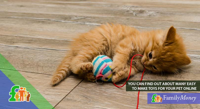 A kitten playing with a home made toy, which can saved money for its owner